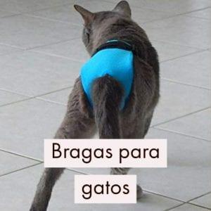 Bragas para gatos