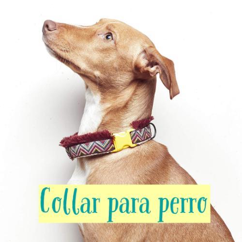 collar para perro