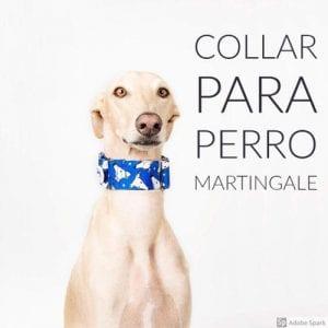 Collar para perro Martingale