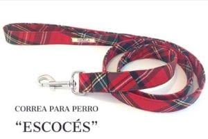 Correa para perro escocés