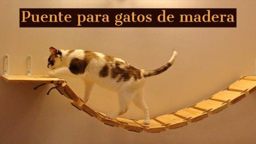 puente para gatos